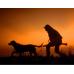 Dog-Tracking
